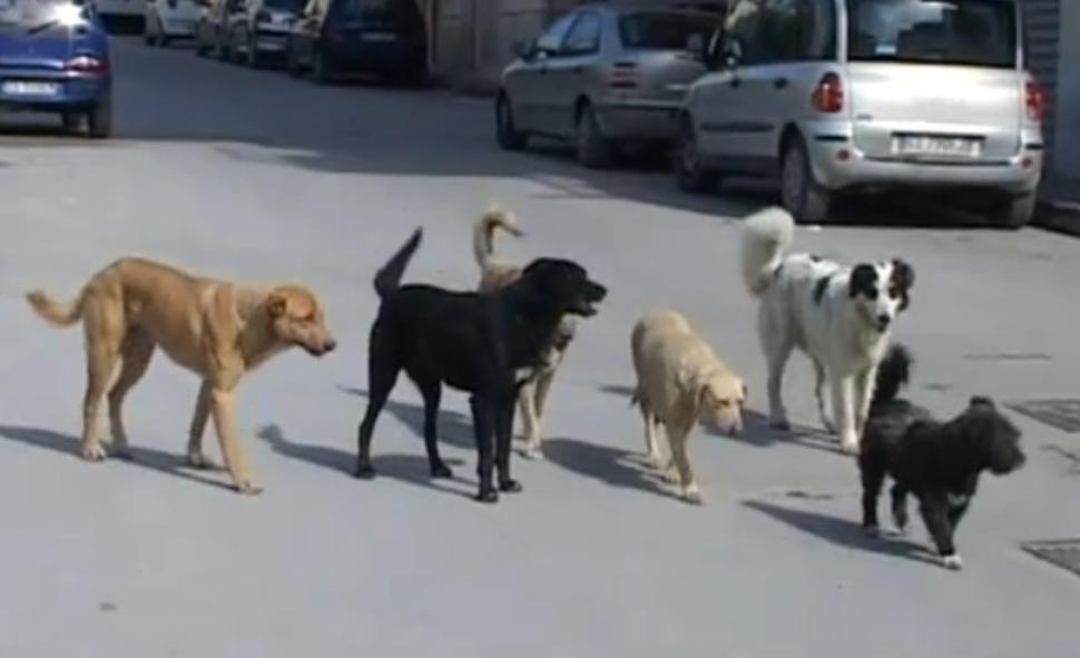 Canicattì: Autorizzazione all'esercizio del rifugio sanitario pubblico per cani e relativa inaugurazione.