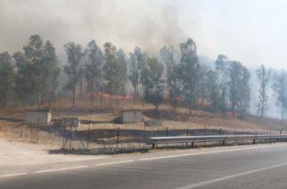 Comitini: A fuoco il boschetto nella parte alta del paese. Arrestato piromade