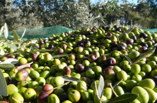 Joppolo Giancaxio: Sorpreso mentre sversava i reflui della molitura delle olive.
