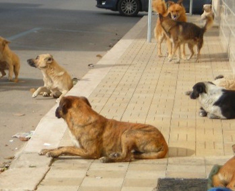 Sciacca: La strage di cani in contrada Muciare, recuperate 25 carcasse
