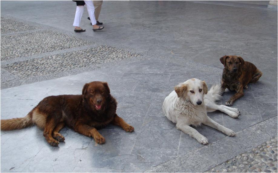 Sciacca: Operazione di soccorso e salvataggio di una decina di cani a Muciare