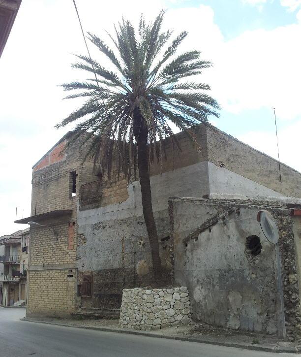 Campobello di licata la palma di via manin ha la sua - Storia di palma domenica ks1 ...