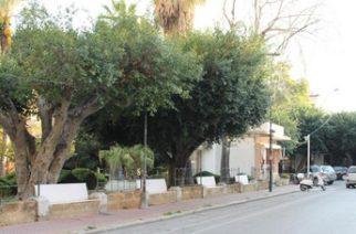 Agrigento: La Consigliera Palermo chiede all'Amministrazione comunale di provvedere  alla potatura degli alberi di Porta di Ponte