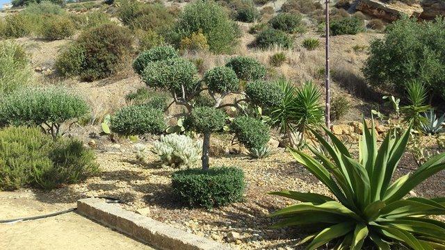 Agrigento: Domani al Giardino botanico, annullo speciale e la Mattinata d'inverno del Fai.