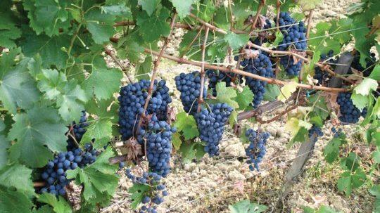 Provincia di Agrigento: Il settore vitivinicolo al centro del dibattito tra esperti e rappresentanti politici