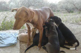 """Cani uccisi per avvelenamento, Stefano Pellegrino (FI): """"Il maltrattamento di animali è un gravissimo reato punito con pene severissime"""""""