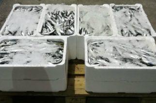 Licata: Sequestro di tonni da parte della Guardia Costiera