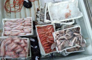 SICUREZZA ALIMENTARE NON GARANTITA:  sequestro di circa 200 kg di prodotti ittici privi di tracciabilità